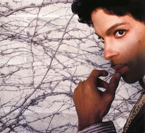 Prince Musicology
