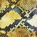 Amazing Snakeheads Amphetamine Ballads