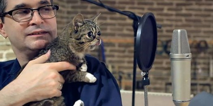 10 Essential Albums produced by Steve Albini (and Lil Bub)