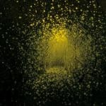 The Antlers Burst Apart review