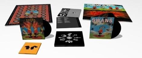 swans-white-light-box-470x352