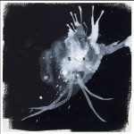 Sigur Ros Route One review