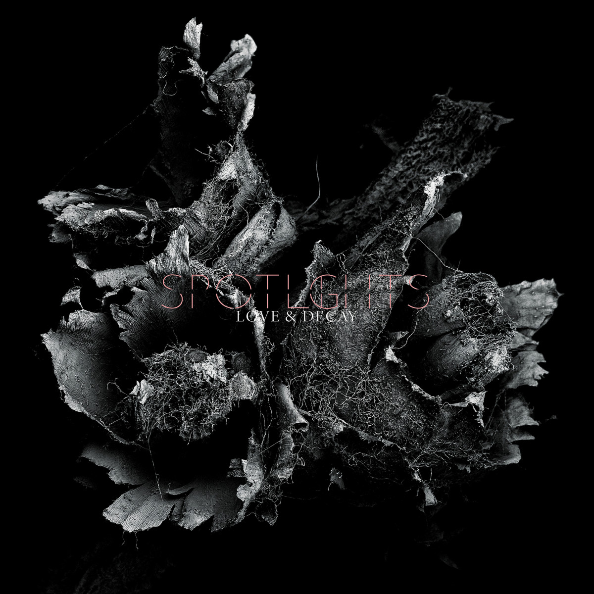 spotlights new album 2019 love and decay