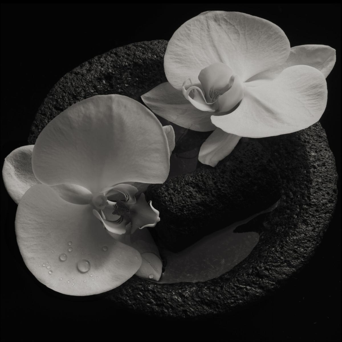 Mike Patton new album Corpse Flower