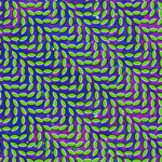 Animal Collective : Merriweather Post Pavilion
